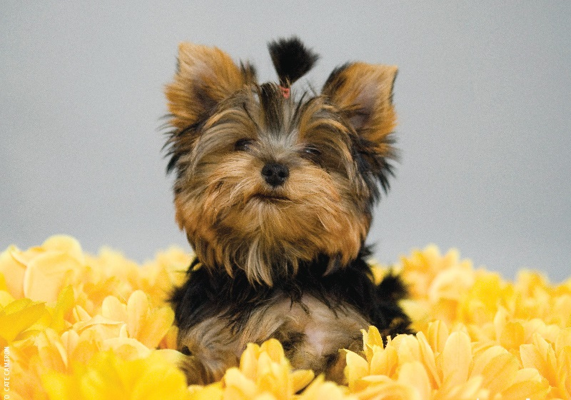 Most Breathtaking Dog Breeds You Need To Own