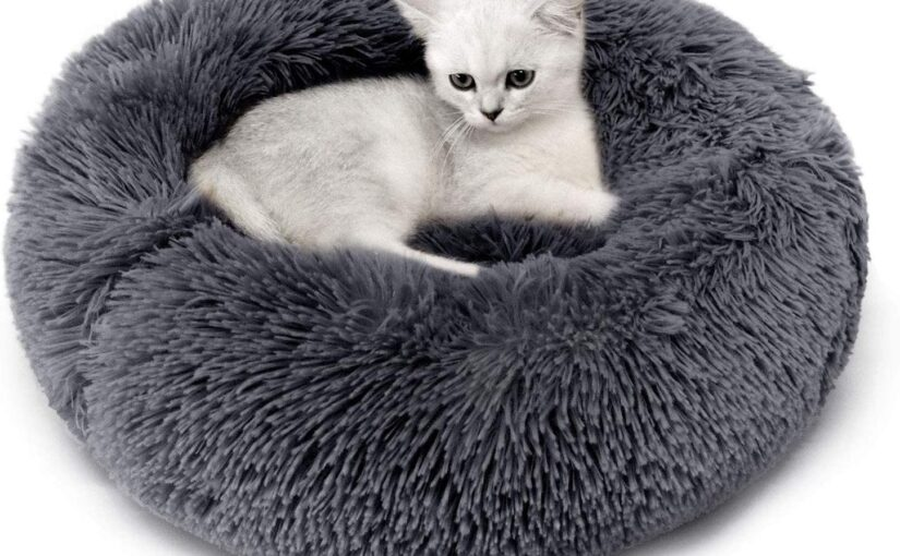 Cat Beds – An Important Material for Your Feline Companion