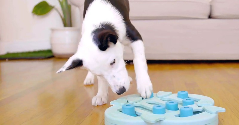 Dog Puzzle Toys and their Benefits
