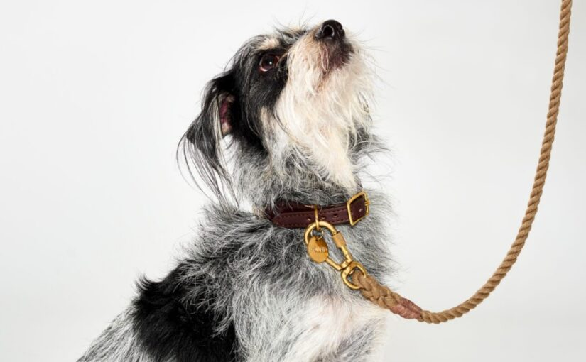 Most Important Small Dog Supplies You Need