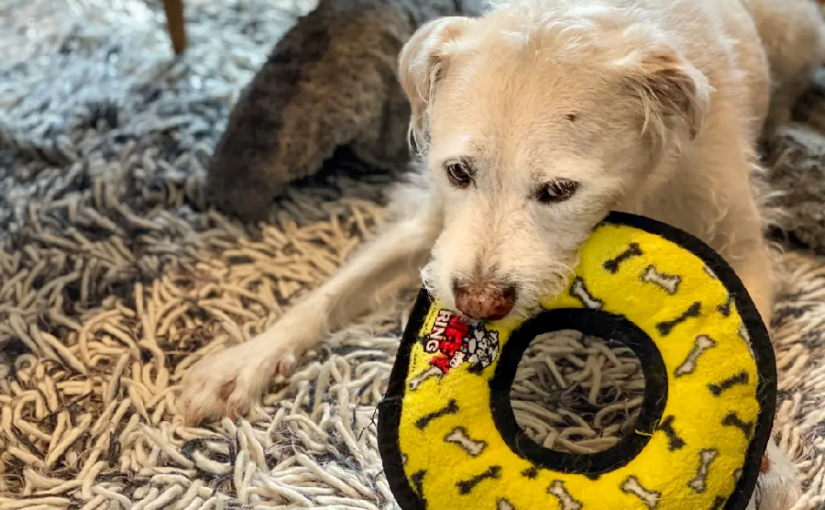 Factors Contributing to Why Dog Toys are So Expensive