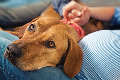 Pros and Cons of In Home Pet Euthanasia