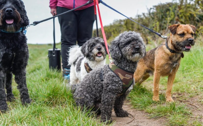 The Importance Of Doggy Day-Care As We Return To Work