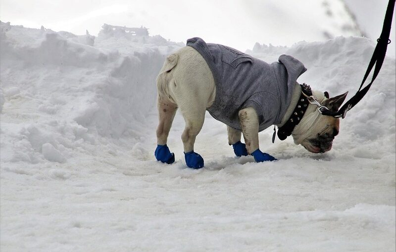 After all, how cold is too cold for dogs. What you should do?