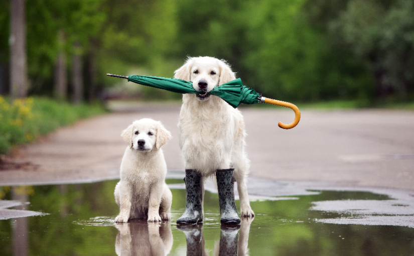 Tips for walking your dog in the rain